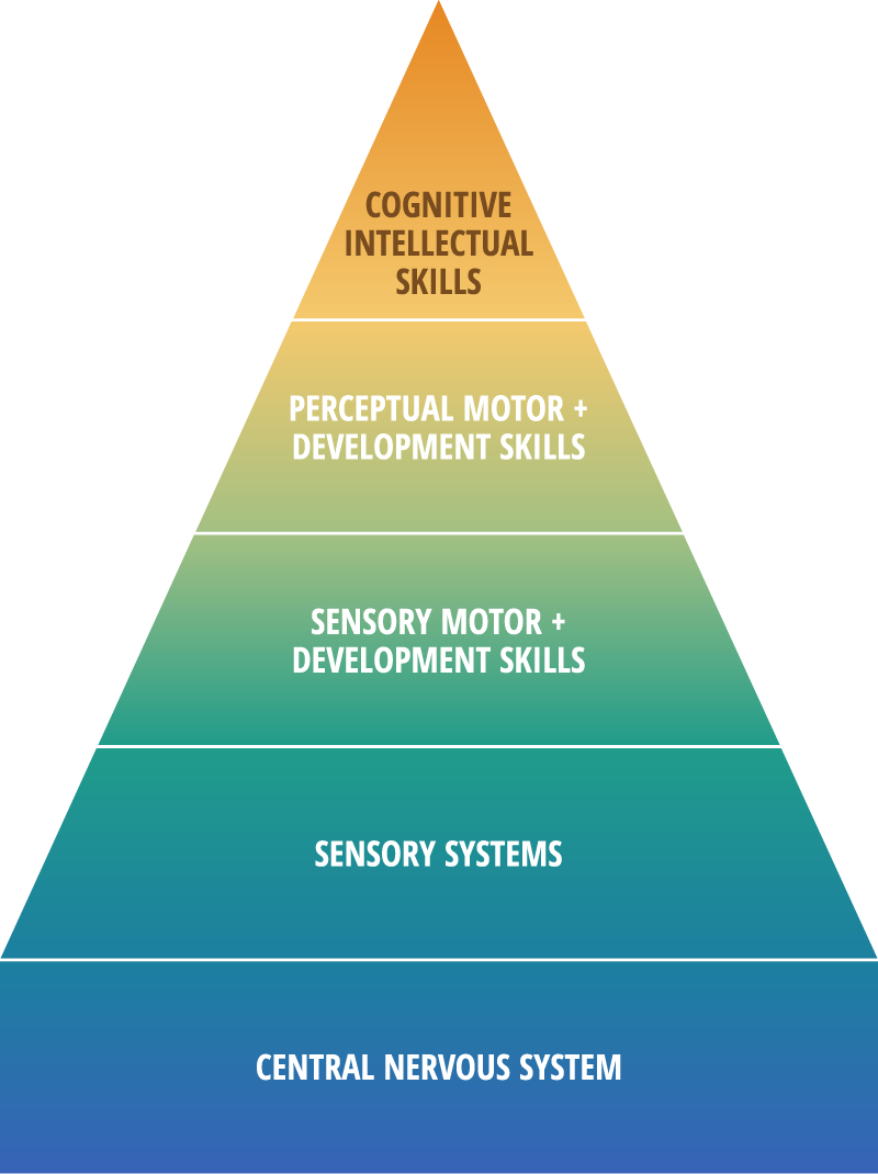 Pyramid of Development: Cognitive Intellectual Skills, Perceptual Motor + Development Skills, Sensory Motor + Development Skills, Sensory Systems, Central Nervous System (top to bottom)